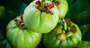 Garcinia Cambogia per dimagrire naturalmente